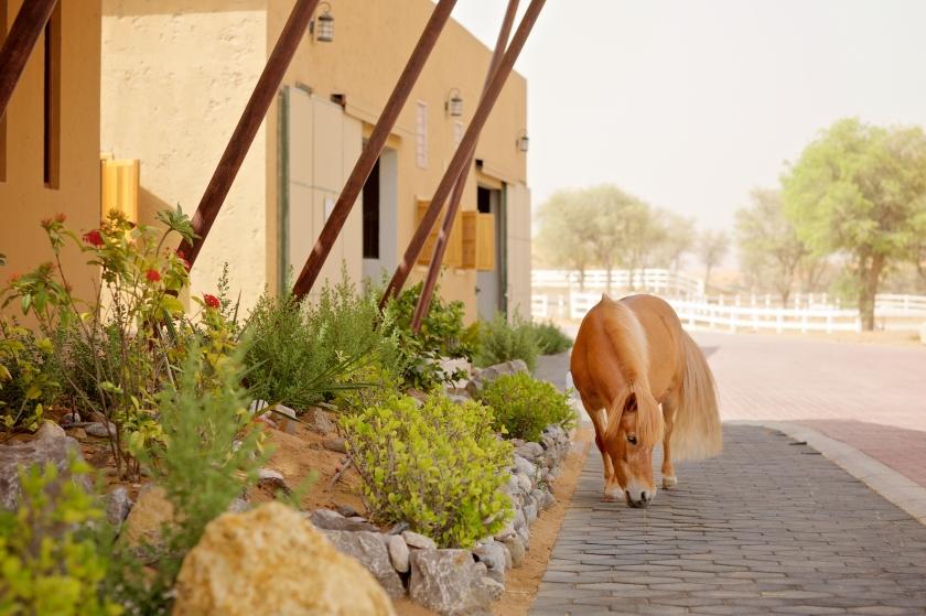 pony outside.jpg